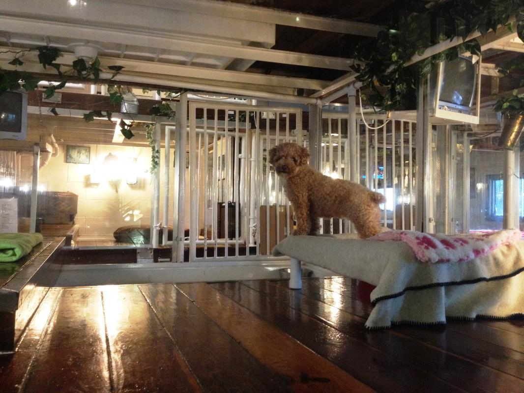 Avenue Near Me >> Animal Clinic Near Me: Canine Hotel Suites 🐶| Newport Beach,CA