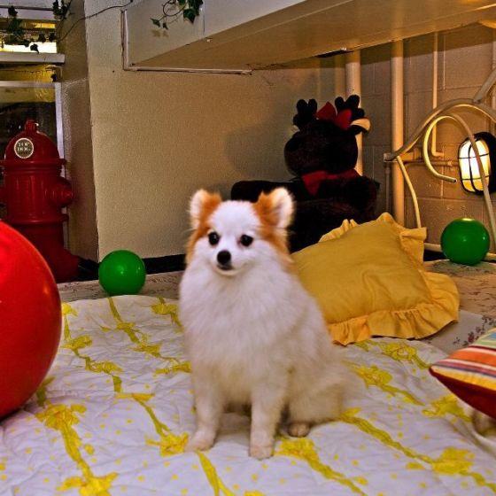Dog at Newport Center Animal Hospital